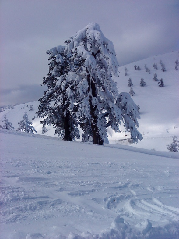 Winter in Greece, Vasilitsa