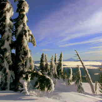 view of Mt. Jefferson, Timberline