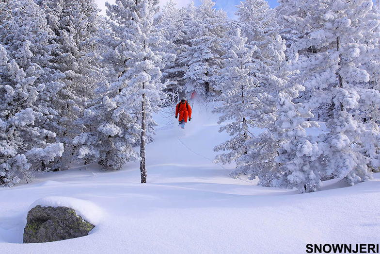 Pustinas Forest Jump, Brezovica