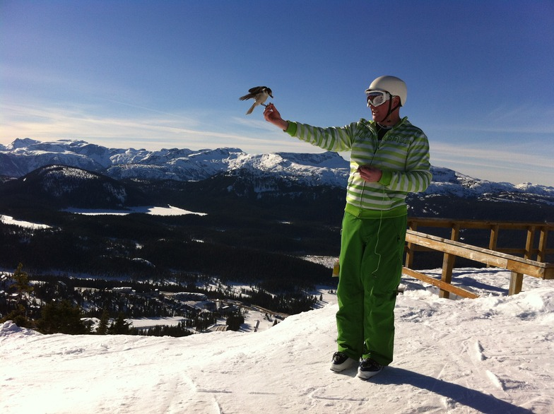 This is January?, Mount Washington