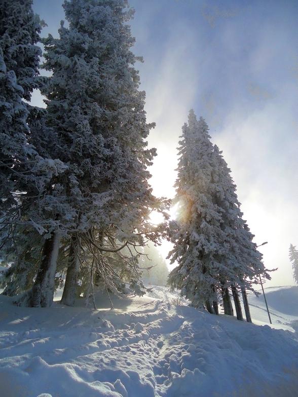 Sun VS fog, Jahorina