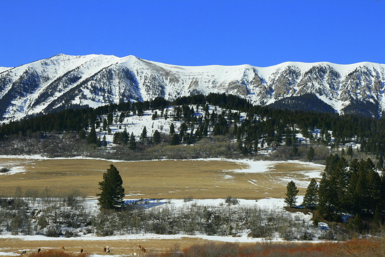 Bridger Bowl snow