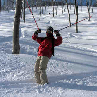 tree run, Madarao Kogen