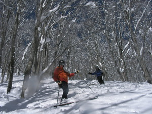 tree & steap slope, Madarao Kogen photo