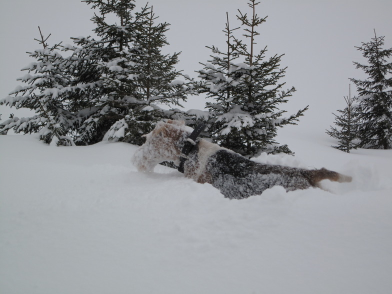 Snowdog, La Clusaz