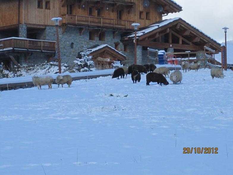 Sheep on nursery slope, Sainte Foy