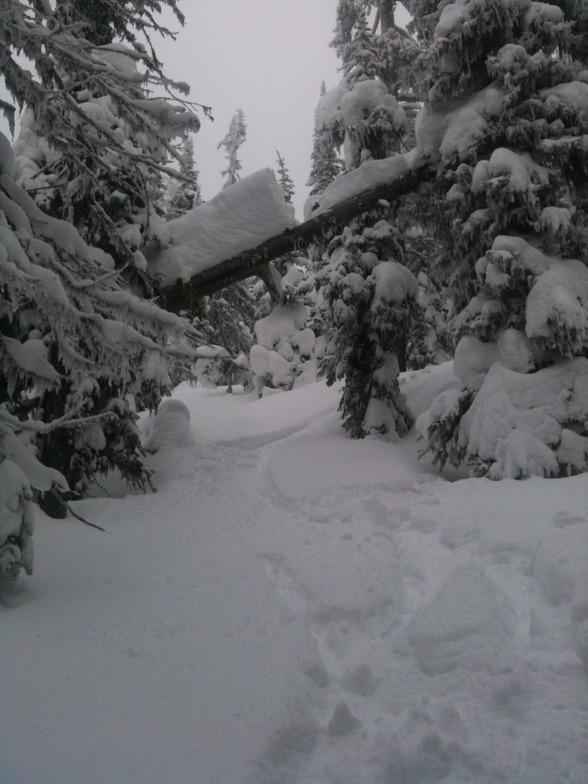 Tree Skiing, Big White