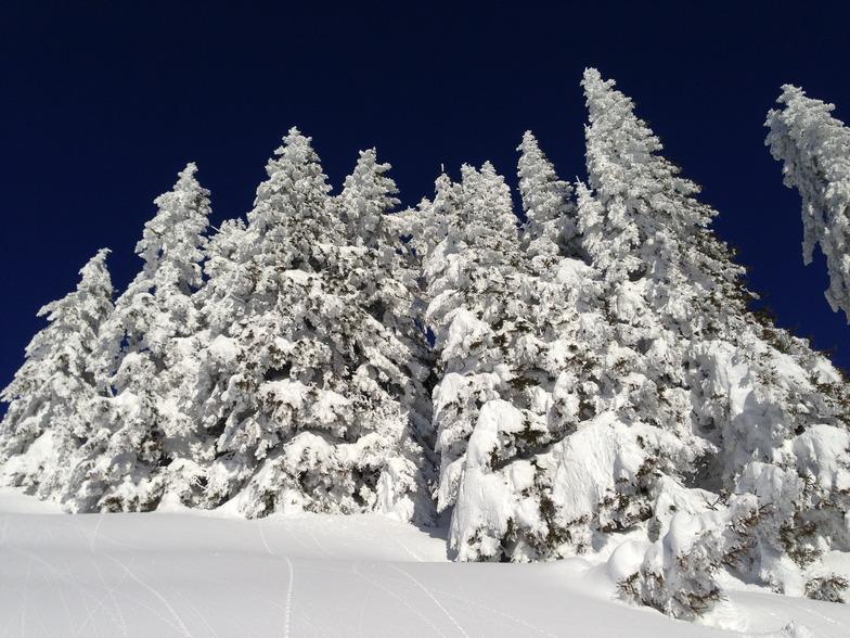trees, Morzine