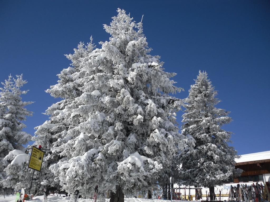 feb 2013, Alpbachtal