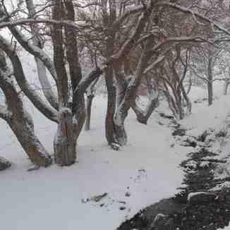 زمستان منطقه گردو اراک