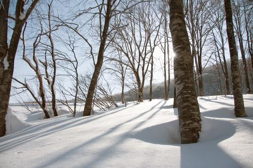 Hakuba 47 Ski Resort by: jed foster