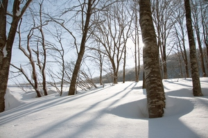 Knee deep and untouched !, Hakuba 47 photo