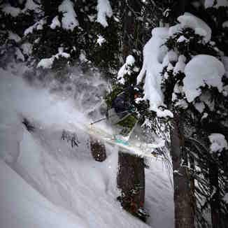 Snow heaven, Revelstoke Mountain Resort