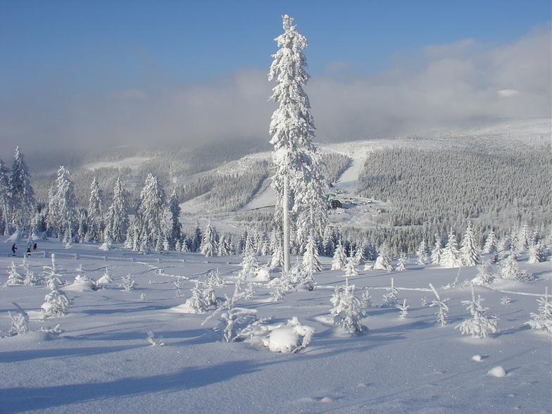 FROZEN! Cervenohorske Sedlo, Jeseniky Mountains, Czech Republic - January 2005, Červenohorské Sedlo