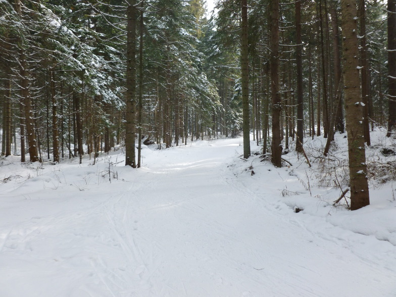 cool forest views, Borovets