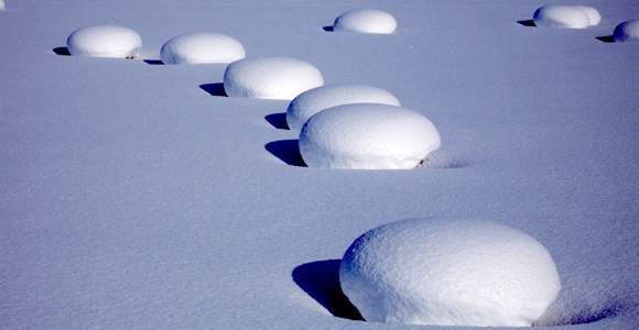Snow mushrooms, Otaru Tenguyama