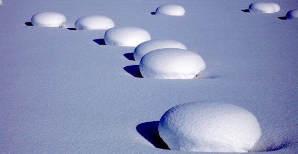 Snow mushrooms, Otaru Tenguyama
