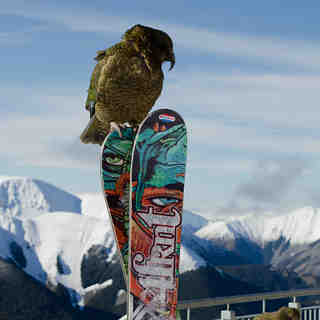 Cheeseman Kea, Mount Cheeseman