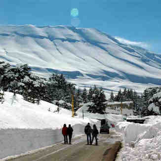 Cedars, north Lebanon