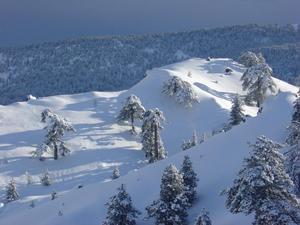 Fresh snow in Cyprus, Mt Olympus photo