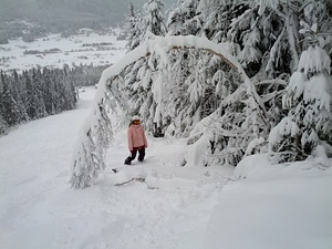 Powder Day in Norway, Trysil photo