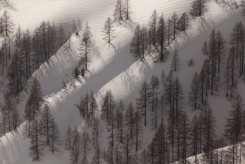 Treeline, Ramsau am Dachstein (Rittisberg)