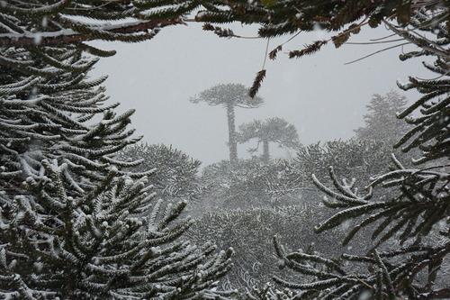 Las Araucarias Ski Resort by: Casey Earle