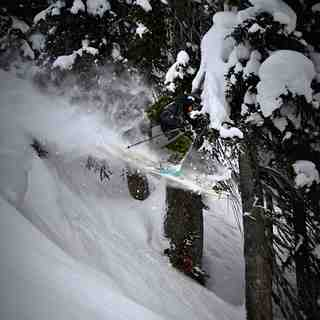 Paradise Powder, Revelstoke Mountain Resort