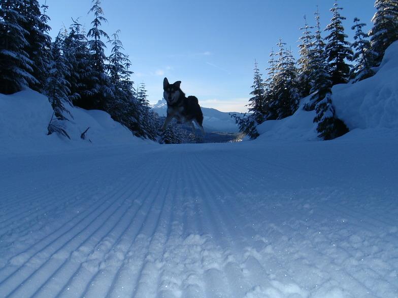 Attack, Ski Callaghan
