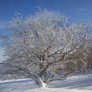 Tree at Rothanglift, Bischofsheim an der Rhon