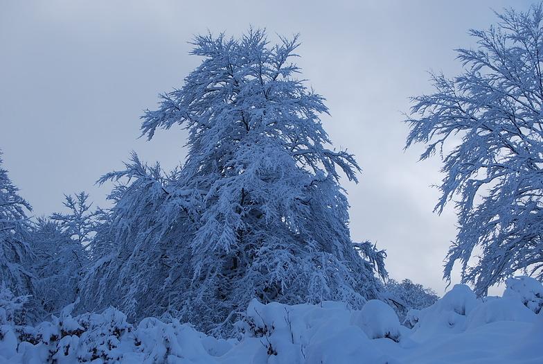 Detalle en Trijuerda, Picos De Europa