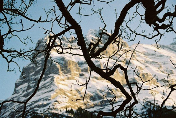 Wetterhorn near Grindelwald, Wengen