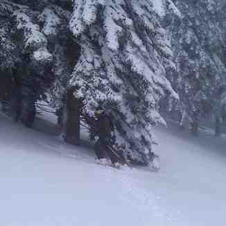 Lost in the trees, Kalavryta Ski Resort