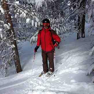 sarıkamış tree skiing