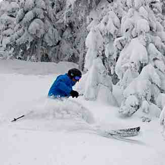 Deep Powder on Jan 3rd 2014, Sun Peaks
