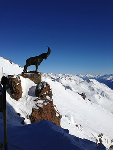 chamois of piz nair, St Moritz photo