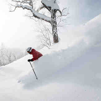 Skiing Furano Powder