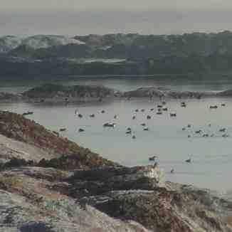 پرندگان مهاجر در دریاچه نمک  اراک