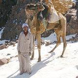 snow bedouin, Egypt