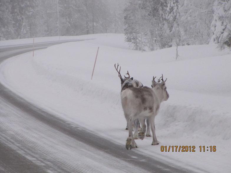 Lapland, Yllas