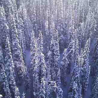View from the Peak 2 Peak, Whistler Blackcomb
