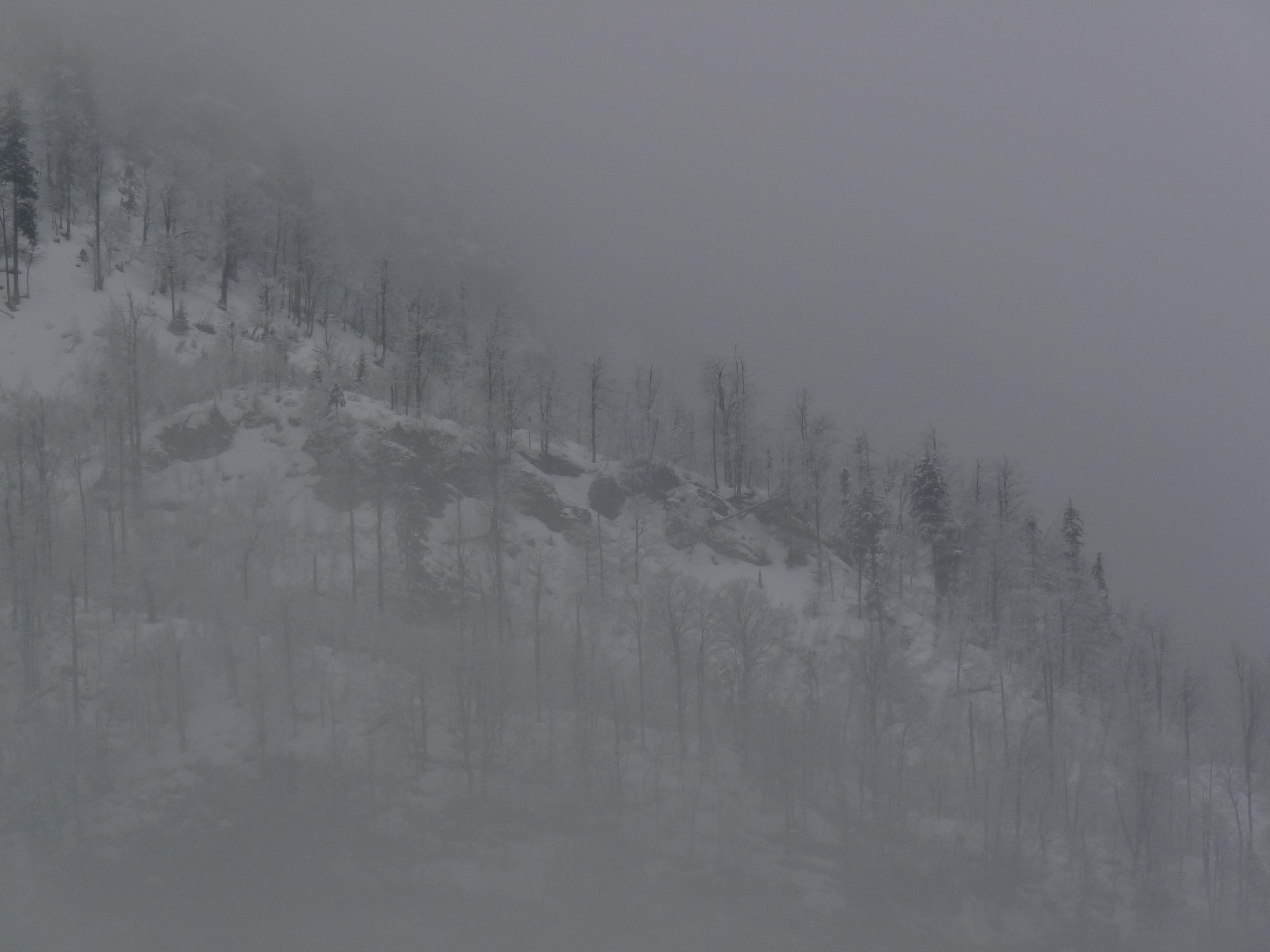 Vogel mists