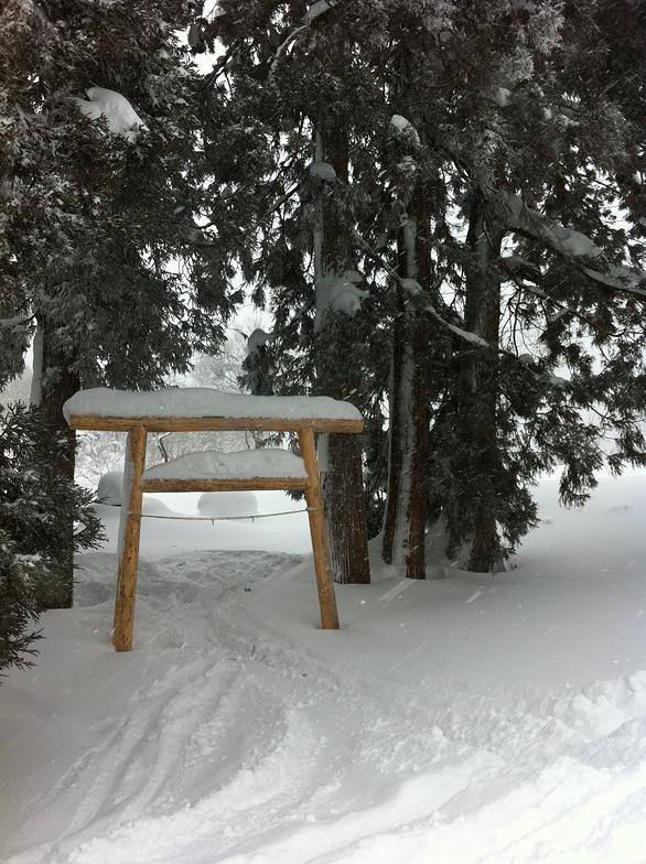 this is why we ski in Japan, Nozawa Onsen