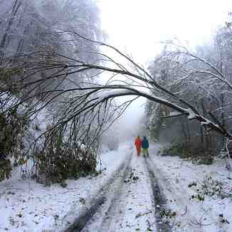 The fallen tree, Brezovica