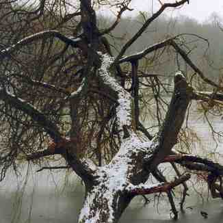 Wintertime in Tervuren park - Belgium