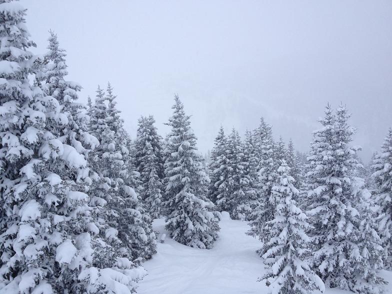 fluffy Dolomiti, Canazei