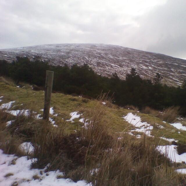 Seefin slope summit to mid., Seefin (Monavullagh)