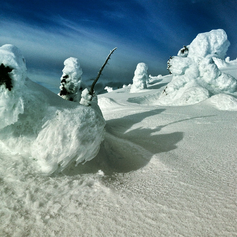 Snow Ghosts in the Alpine, Big White