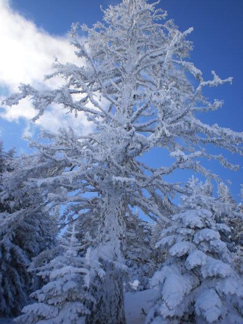 snowtree, Mainalo