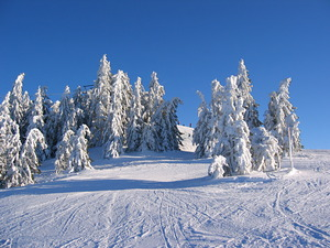 Snowy trees, Scheffau photo